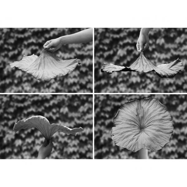Блюдо A Lotus Leaf черное