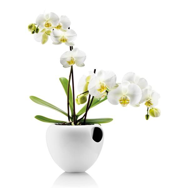 Горшок для орхидеи Orchid Pot белый
